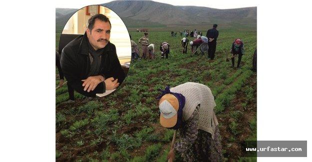 Tarım işçileri için TBMM'den çıkacak yasa bekleniyor