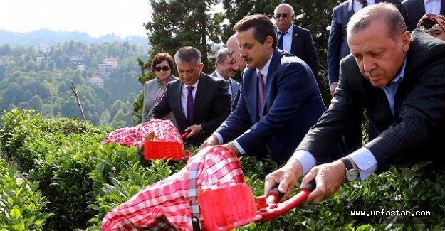 Erdoğan, Bakan Çelik ile çay kesti