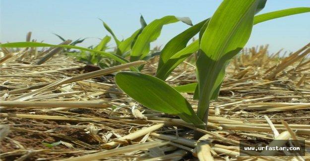 Urfa'da toprak koruma çalıştayı düzenlenecek