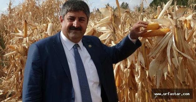 Eyüpoğlu, 'gelecek nesiller için yerli tohum'...