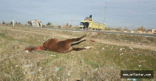 At yine bir kazaya sebep oldu
