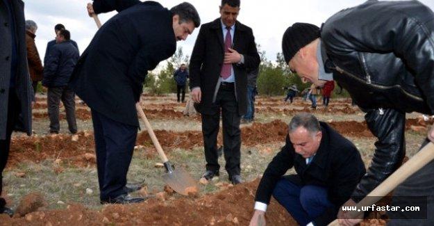 Osmanbey'de bin fidan toprakla buluştu