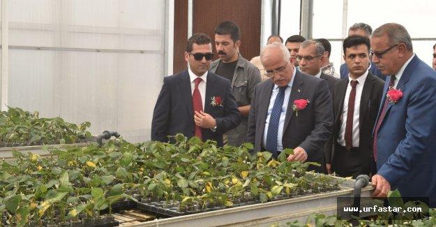 Karagül süs bitkileri sektörüne kazandırılıyor