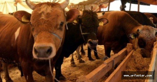 Et üreticilerinden flaş açıklama