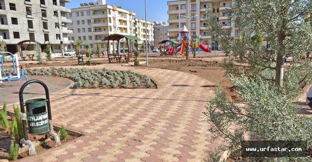 Ceylanpınar Zeytin Dalı Parkı'na kavuşuyor