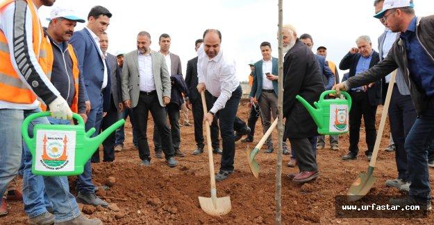 Urfa'da ne kadar ağaç dikildi?