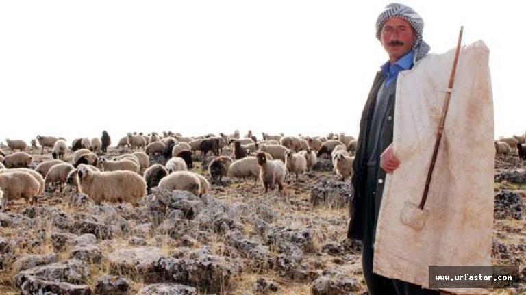 Siverek'te çobanlar kavga etti!