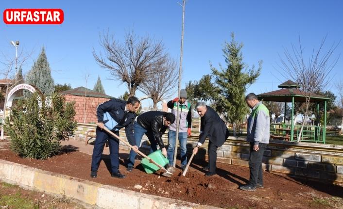 Hilvan'da yeşillendirme çalışmaları devam ediyor
