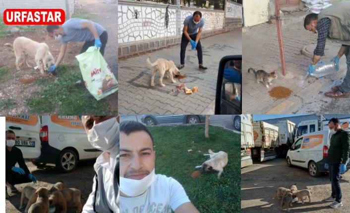 Siverek'te sokak hayvanları için harekete geçildi