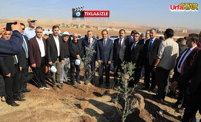 Büyükşehir'den 'Yeşil Urfa' seferberliği...
