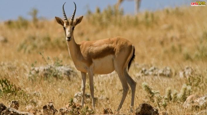 Av turizmi için Urfa'da 14 kota belirlendi