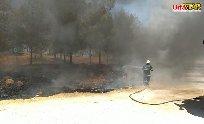 Urfa'da orman yangını...