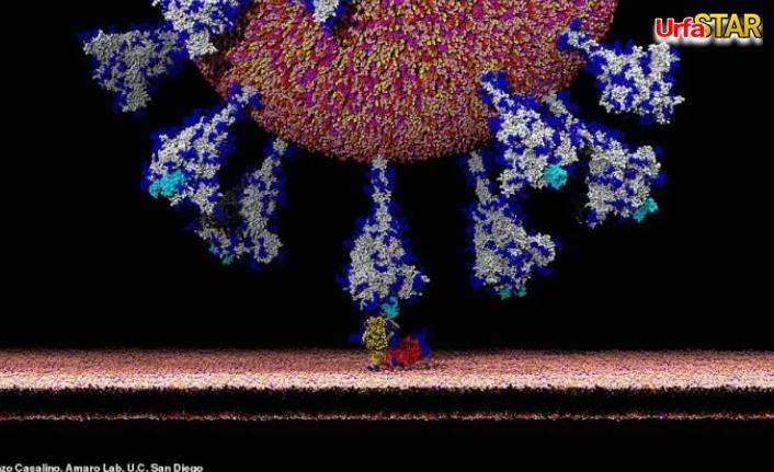 Virüs nasıl mı yayılıyor? İşte mikroskop görüntüleri...