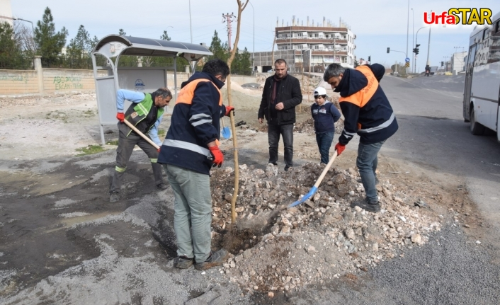 Viranşehir'de ağaçlandırma seferberliği başladı