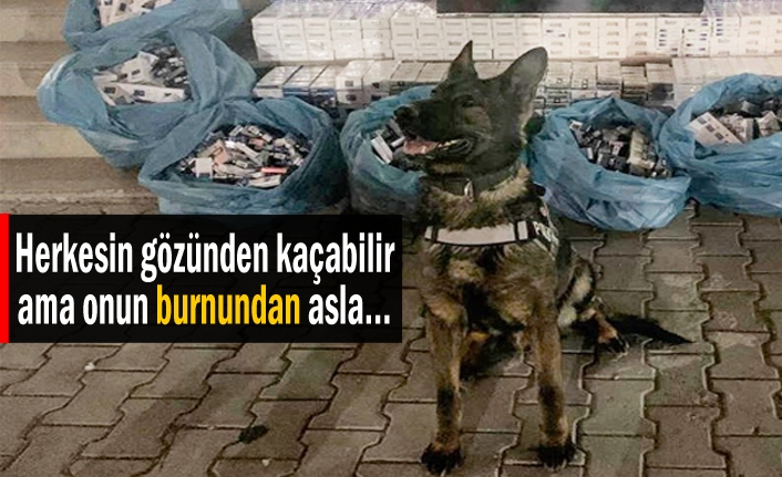 AFERİN CURİS!