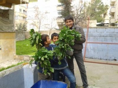Bina bahçelerindeki bitkiler servet değerinde