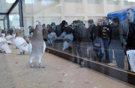 Güvercinler bu festivalde buluştu