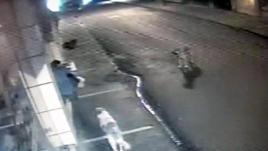 Köpekle Hırsızlık Yapan Şahıs Yakalandı