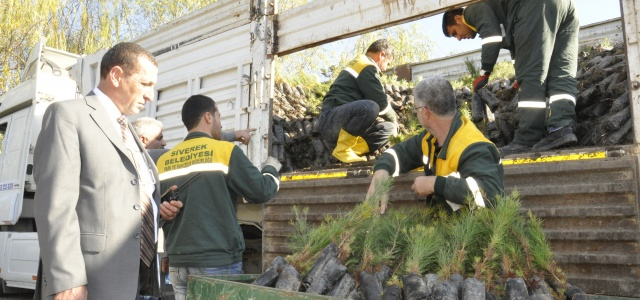 Siverek Belediye'sinden ağaçlandırma çalışması