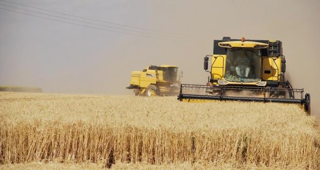 Suriye'de buğday istiflenmeye başlandı