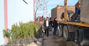Hilvan'da 16 Bin Ağaç Toprakla Buluşturuldu