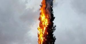 Bu ağacın neden alev aldığına şaşıracaksınız!
