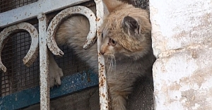 Kedinin imdadına vatandaşlar yetişti