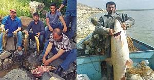 Atatürk barajında balık bereketi