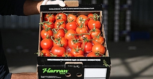 Domates üreticisinin gözü Avrupa pazarında