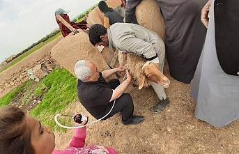 Telabyad'da Tarım ve Hayvancılık Canlanıyor