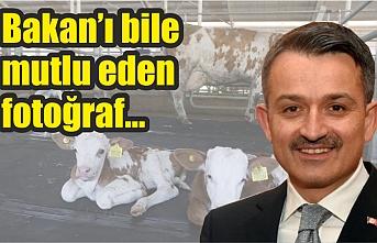 Ceylanpınar TİGEM'de bir ilk!