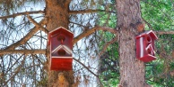 Hilvan Belediyesinden Kuşlara