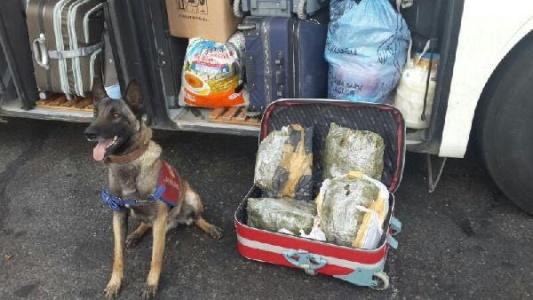 Valizin içinden bakın ne çıktı?