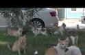 konteyner kentin kedileri yardım bekliyor