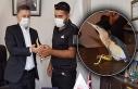Nesli tükenen Balaban Kuşu yetkililere teslim edildi