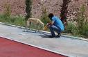 Bozova'da hayvan sahipsiz kalmıyor
