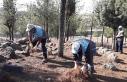 Viranşehir'de ormanlık alanda temizlik