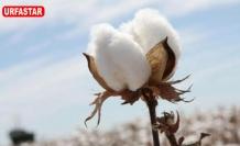 Urfa'da pamuğun son fiyatı belli oldu