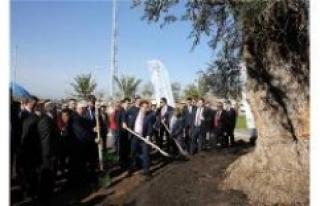 Antalya'da dikili ağacı var...