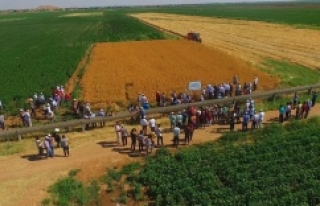 Urfa'da tarla günü düzenlendi