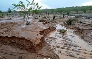 Hilvan'da, yağmur ve dolu ekili arazileri vurdu