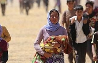 Urfalı Rektör Suriyelileri yazdı...