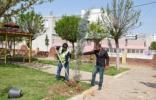 Hilvan Belediyesi Ağaçlandırma Çalışmalarına...
