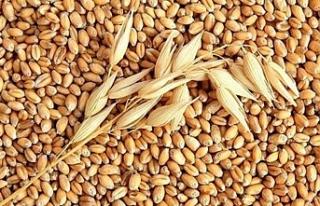 Urfa Ticaret Borsası'nda buğdayın fiyatı...