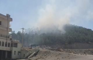 Urfa'da ormanlık alanda yangın çıktı!