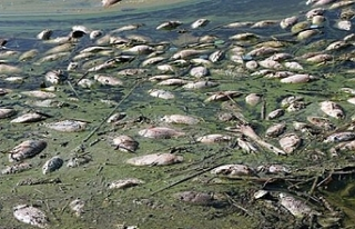 Atatürk barajında şok ölümler