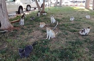 Yüzlerce Kedinin Hayatı Tehlikede!