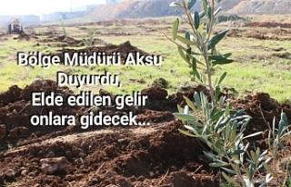 Urfa OSB bölgesinde tam 6 bin ağaç...