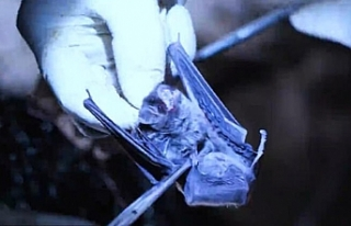 7 dakikalık belgesel kirli çamaşırları ortaya...