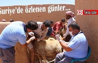 Barış Pınarı Bölgesi'nde bayram hazırlığı